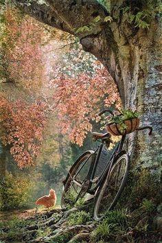 Vieux vélo contre un arbre