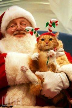 Santa & elf cat