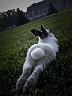 bunny + animal butt = @Laura Jayson Bell favorite thing.
