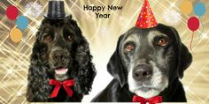 Happy New Year  www.pamperedpoochpartiesandbarkerytreats.com.au