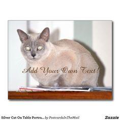 Silver Cat On Table Portrait Postcard