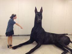 A notícia que o maior cão do mundo pode ser abandonado pode ser falsa