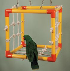 Parrot Cube would work for this Amazon, But, it would take one a tad larger for my blue and golds.