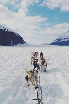 Husky, snow and mountains. Travel inspiration