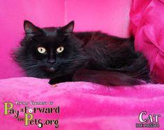 Adopt Cat On Cats Animal Help Animals