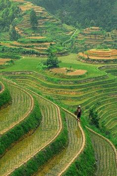 visitheworld:  Longshen Rice Terraces in Guilin, China (by Jasper the Roclimbr).