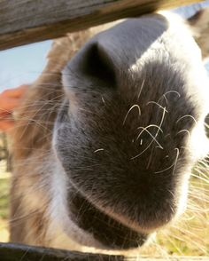 #SundayFunday #donkeysofinstagram #maymont #pleaseletmepetyou
