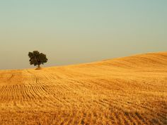 Lonely tree somewhere in Navarre Spain ( via Jule Berlin) thanks to Ilovespain for pointing out the correct location of this photo