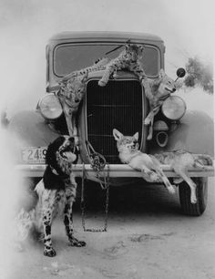 Vintage Photography | Images / Vintage photography / Hunting catch old vintage photography ...