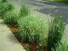 Garden landscape category for exciting landscaping native for Ornamental grass border design