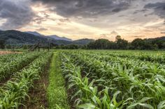 Kituwah Corn: This area was once an agricultural property called Ferguson's Field. (Near Cherokee NC) Cherokee Nc, Mountain Vacations, Hdr Photography, Camera Reviews, Great Smoky Mountains, National Parks, Beautiful Places, Outdoor, Outdoors