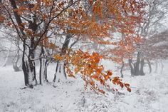 "Autumn or winter in the Ore mountains - <a href=""http://www.danielrericha.cz"">www.danielrericha.cz </a> <a href=""https://www.instagram.com/danielrerichacz"">I N S T A G R A M</a> 