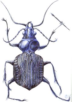 Insect in ballpoint