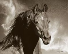 Barry Hart - Wild as the Wind - Western Print - Canvas Options