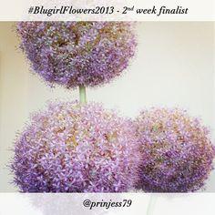#BlugirlFlowers2013 Instagram Photo Contest finalist @Jessica Olmi