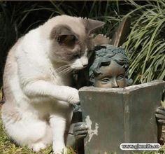 Poze Animale-Ce citesti aici fara mine? Bancuri glume poze - Glumite.ro