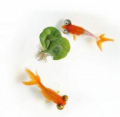 Goldfish - Celestials Animals And Pets, Animals Planet, Cute Animals, Golden Fish, Aquarium Ornaments, Hello To Myself, Little Pets, Fauna, Freshwater Fish