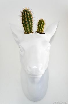 Pretty sure this little friend needs to live in my life.  Cactus Deer Head Planter