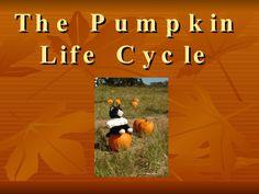 the-pumpkin-life-cycle by jaimejoyh via Slideshare
