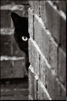"""Black Cat Advice: """"A successful man, (or woman) is one who can lay a firm foundation with the bricks others have thrown at him."""" (Or her.)"""