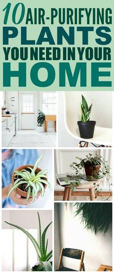 These air purifying plants are SO COOL! I'm so glad I found these AWESOME home decor ideas! Now I have a great way to decorate my home with low maintenance plants that purify my hair! #plants #lowmaintenanceplants #airpurifyingplants #herbalremedies #herbalmedicine #naturalremedies #planttips #homedecor #homehacks