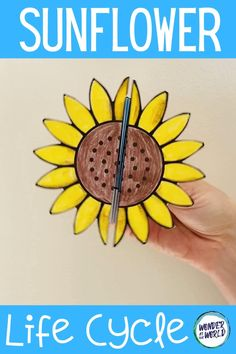 Science Projects, Projects For Kids, Craft Projects, Sunflower Life Cycle, Cycle For Kids, Plant Crafts, Nature Crafts, Life Cycle Craft, Planting For Kids