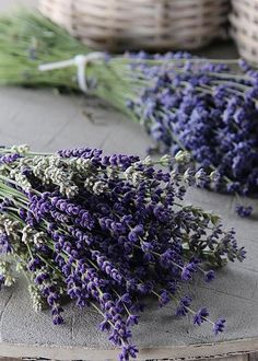 Lavender by Karen Block