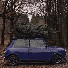 156 Best Merry Mini Christmas Images In 2019 Mini Stuff Mini