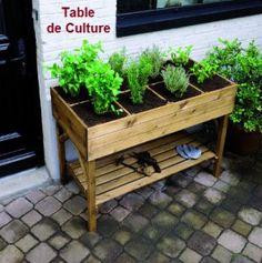 La tanaisie au potager, un répulsif naturel efficace | Conseils Jardinage Bio