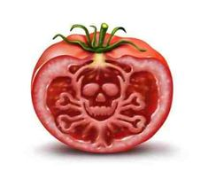 Growing tomato plants from seeds is not that difficult and it is extremely rewarding. Phenomenal Growing Tomatoes from Seeds Ideas. Tips For Growing Tomatoes, Growing Tomato Plants, Growing Tomatoes In Containers, Grow Tomatoes, Growing Vegetables, Cherry Tomatoes, Baby Tomatoes, Dried Tomatoes, World Food Prize