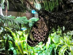 Butterfly Exhibit, Natural History Museum