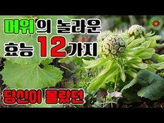 당신이 몰랐던 머위의 놀라운 효능 12가지!! | SHARE 건강정보 - YouTube Medicine, Herbs, Plants, Herb, Planters, Medical, Plant, Spice, Planting