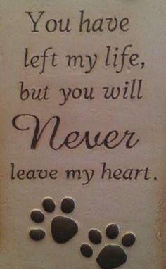 Pet condolence