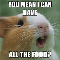 """""""You mean I can have all the food?"""" Hamsters love to eat. Cute Animal Memes, Animal Quotes, Cute Funny Animals, Funny Animal Pictures, Cute Baby Animals, Animals And Pets, Hamster Pics, Funny Hamsters, Baby Guinea Pigs"""