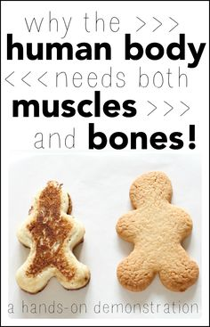 Introduce your child to the human body and answer the question of why the human body needs both muscles AND bones. A great demonstration for young children!