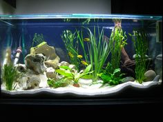 diy aquarium furniture stands are an integral part of every aquatic system.- aquarium furniture stands are an integral part of every aquatic system. The aquarium stand should be sturdy so that it can bear the weight of a filled a. Cichlid Aquarium, Diy Aquarium, 75 Gallon Aquarium Stand, Fish Aquarium Decorations, Aquarium Design, Aquarium Fish Tank, Aquarium Ideas, Tropical Freshwater Fish, Tropical Fish Tanks