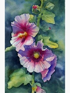 Pink Hollyhock' Poster by Ann Mortimer Watercolour cm Artists watercolours on cold pressed paper. / This was taken from a photo of a hollyhock which I took in our garden last summer. Loved the cast shadow on the lower flower and the deep pink centre. Painting & Drawing, Watercolour Painting, Watercolor Flowers, Watercolors, Hollyhocks Flowers, Arte Floral, Botanical Art, Painting Inspiration, Drawings