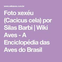 Foto xexéu (Cacicus cela) por Silas Barbi   Wiki Aves - A Enciclopédia das Aves do Brasil