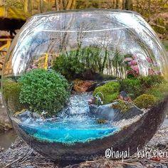 Best of terrarium...