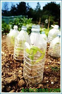 Construir invernaderos caseros es una excelente solución para disponer en invierno de algunos cultivos de