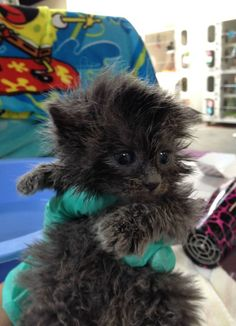 Meet the 29 Cutest Patients in This 24 Hour Kitten Nursery (!!)