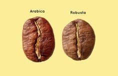 Наука кофе: Что известно  о самом противоречивом напитке. Изображение №2.