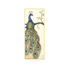 Peacock ❤ liked on Polyvore featuring bird
