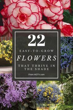Annual Flowers That Thrive in the Shade Brighten dark corners with the flower power of made-for-the- Easy To Grow Flowers, Garden, Tropical Flowers, Flowers, Shade Plants, Garden Center, Annual Flowers, Growing Flowers, Balcony Flowers