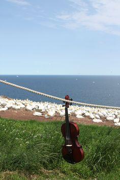 Birdcatcher's Violin
