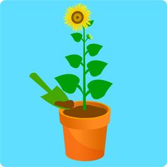 How to Plant Sunflower Seeds. Sunflowers are annual plants that produce large or small yellow flowers in the summer. Sunflowers are very popular because of their beauty, and because they are easy to grow. Planting sunflower seeds in the.