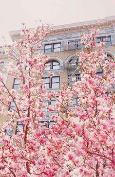 Springtime, Union Square, New York City