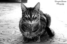 B/W Cat by Evangelos Loutsetis on 500px