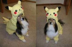 Pikachu for Pets!