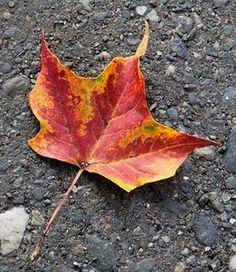 Fall - favorite season
